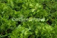 Captura de Salada marcelys